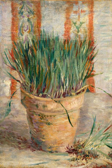 Garlic Chives Vincent van Gogh