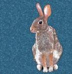bunny-bluestar