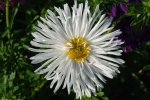 flower_bouquet_white_leaf_nature